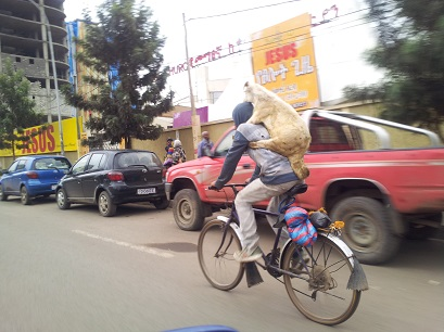 How to Transport Fat Tailed Sheep in Addis Ababa # 3