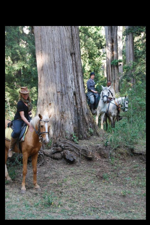Riders with giant juniper trees in Menagesha Suba