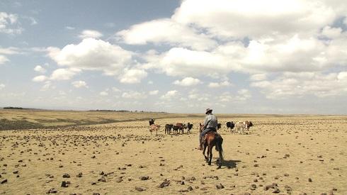 Farewell Equus Ethiopia! (c. S. Pons)