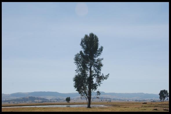 Open plains of central Shoa
