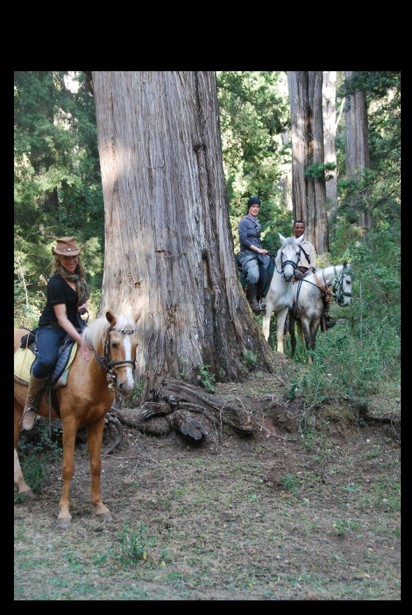 Riders with giant juniper trees in Menagesha Suba